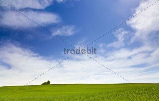 Spring meadow in Hegau, Maegdeberg, Baden-Wuerttemberg, Germany, Europe