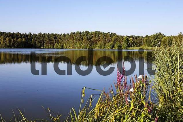 lake near Schwarzenfeld , Bavaria Germany