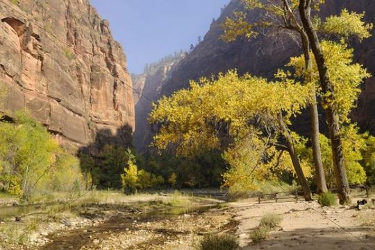 Trail at North Fork Virgin River, Zion Canyon, Zion National Park, Utah, USA
