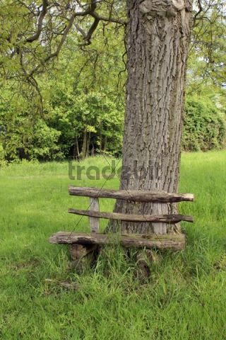 Raw carved wooden bench at the foot of a walnut tree