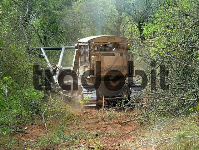 Clearing of the dry forest with bulldozer, Gran Chaco, Paraguay
