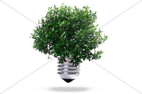 Tree growing from a bulb, symbolic for green energy and renewable energies