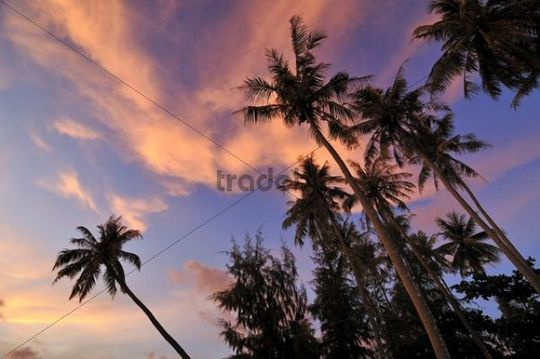 Palm trees against red evening sky, atmospheric sunset, Phu Quoc, Vietnam, Asia