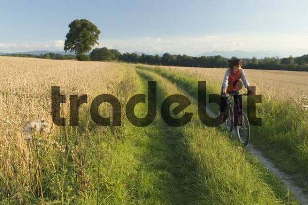 woman with bycicle in a wheatfield