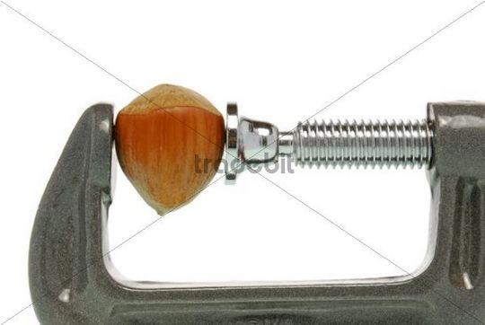Nut clamped in a vice, symbolic picture for solving a problem, a hard nut to crack
