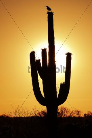 Saguaro National Park East, Rincon Mountain District, Tucson, Arizona, USA, North America