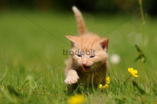 Kitten Bit Cats Dtail
