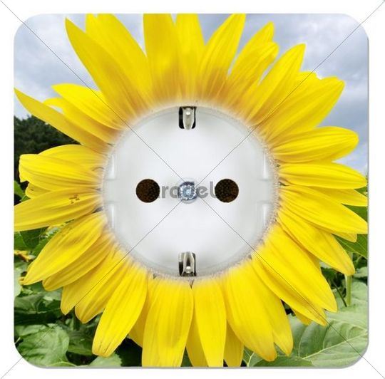Green power outlet in the form of a sunflower
