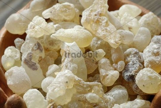 Frankincense, incense, Sultanate of Oman, Yemen, Arabia, Middle East