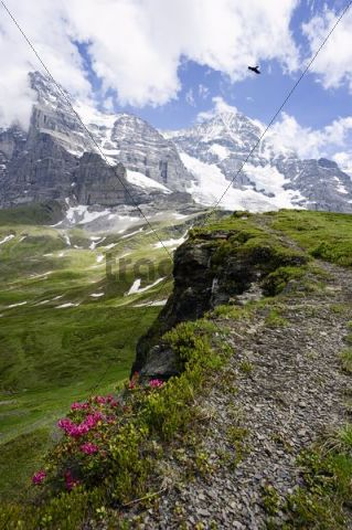 Eiger and Moench mountain with Eismeer slope and glacier, Switzerland, Europe
