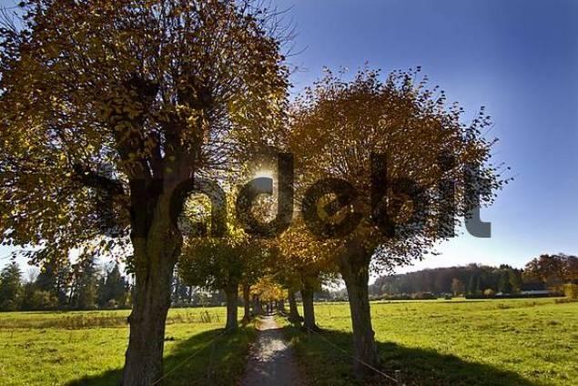 tree trees in fall autumn autumn foliage Starnberg Lake Bavaria Germany