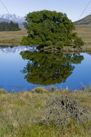 Water reflections of trees and mountains on a lake, Hakatere, South Island, New Zealand
