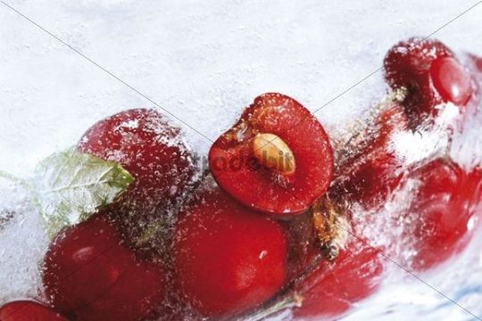 Cherries in ice