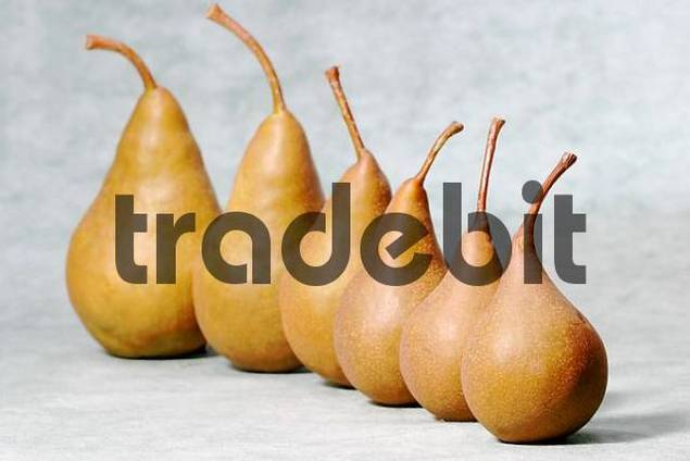 Pears are standing in a row