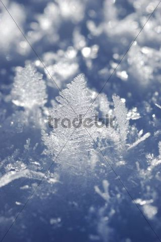 Ice crystals in snow, detail