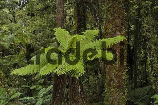 Nile River Walk, Paparoa NP, South Island, New Zealand