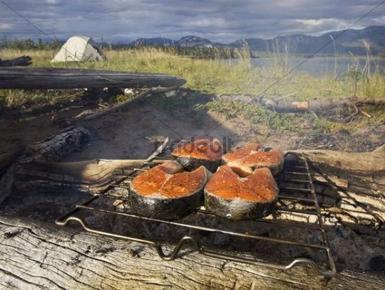 Salmon steak on a camp fire, grilling, grill, barbecue, BBQ, tent behind, camping, Yukon River, Yukon Territory, Canada