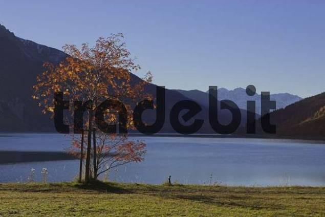 autumn at the Reschen lake, Reschen pass, South Tyrol, Italy