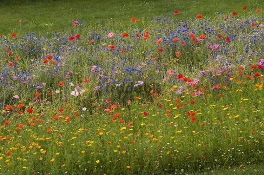 Flower meadow jardin des plantes avranches basse for Au jardin des plantes avranches