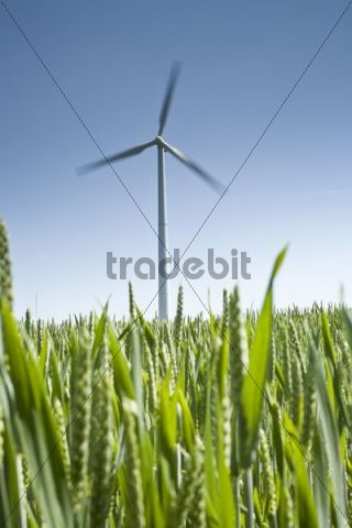 Wind turbine against a blue sky, field in the foreground