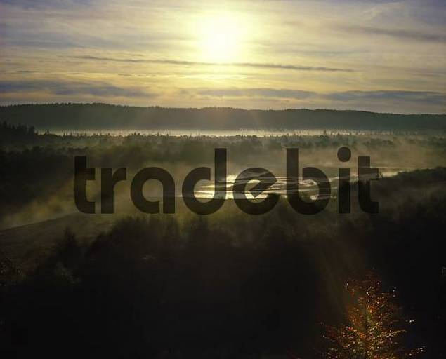 Pupplinger Au Isar river in morning light Bavaria Germany