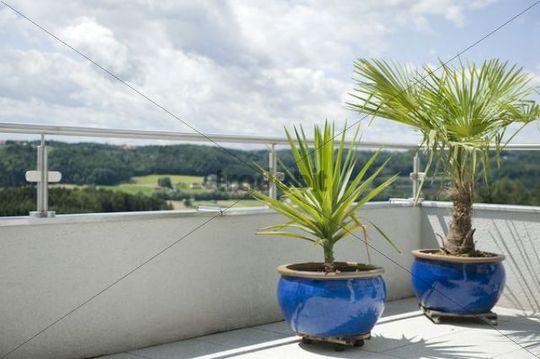 exotische topfpflanzen auf terrasse runterladen natur. Black Bedroom Furniture Sets. Home Design Ideas