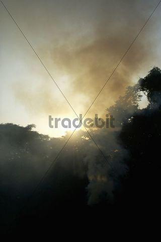 Sunset, trees, Taipei, Taiwan, Asia