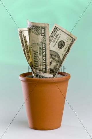 Dollar notes growing in a flowerpot