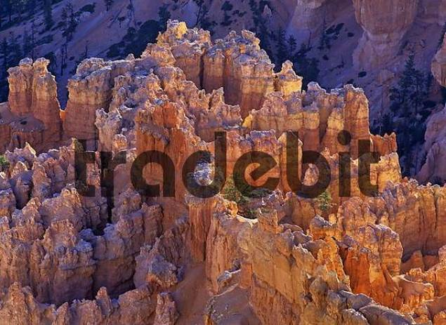 rock formations of the Bryce Canyon at sunrise, Bryce Point, Bryce Canyon NP, Utah, USA