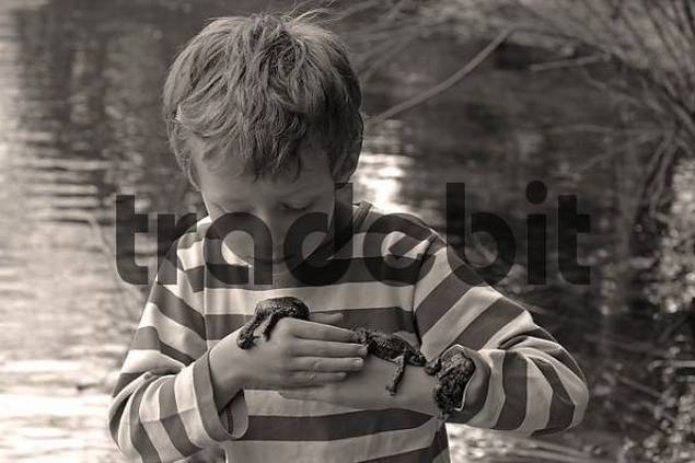 several common European toads  Bufo bufo  lying on hands and arms of a child seven-year-old