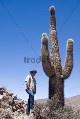 Tourist standing next to a giant cactus in the Atacama Desert, Chile, South America