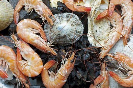 Shrimps, seaweed and shellfish