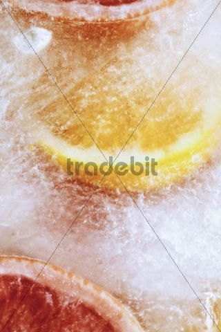 Oranges and Ruby grapefruit frozen in an ice block