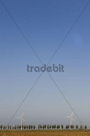 Wind turbines behind a tree-lined avenue, Zeeland, Holland, Netherlands, Europe