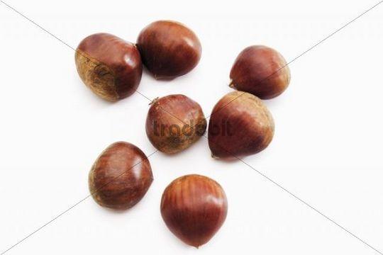 Sweet Chestnuts or Marrons (Castanea sativa)
