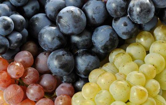 Various varieties of grapes