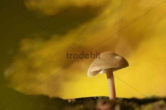 Autumn impression, autumn colors, small mushroom