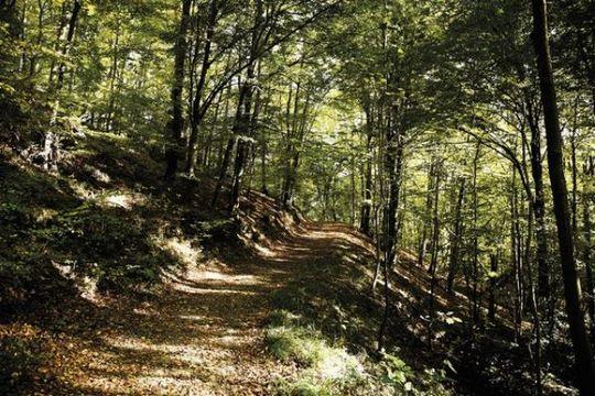 Rheinsteig footpath through the woodland to Loewenburg Mountain, Siebengebirge mountains, North Rhine-Westphalia, Germany, Europe