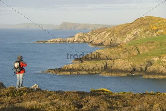Hiker looking at the shore, viewpoint, Pembrokeshire, Wales, United Kingdom, Europe
