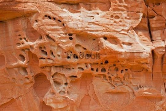 Rock, with eroded holes, Valley of Fire State Park, Nevada, USA