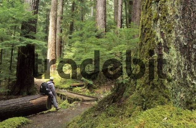 hiker in Sol Duc valley of Olympic National Park