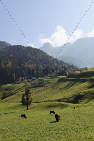 Pasture in the village Zell or Sele, Karawanken mountain range, Carinthia, Austria, Europe