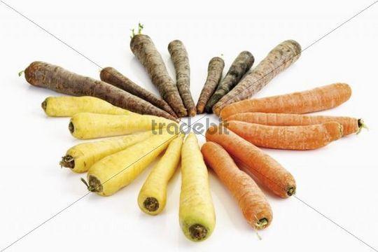 Karottensorten, Möhrensorten, Gelbe, Rote, Violette