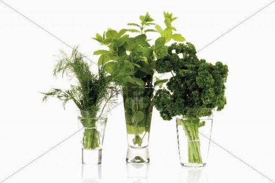 Culinary herbs in jars, dill, lemon balm, parsley
