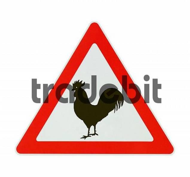 Attention! Avian influenza - white background