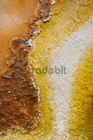 Colourful thermophilic bacteria, microorganisms in the Black Pool, West Thumb Geyser Basin, Yellowstone National Park, Wyoming, Idaho, Montana, America, United States