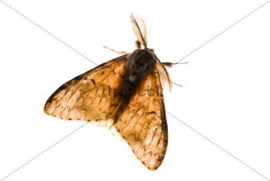 Moth in bright backlight