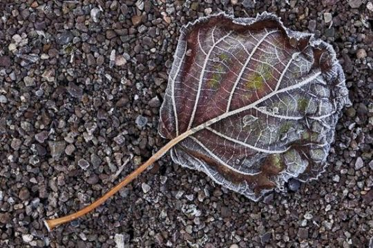 Ice crystals on a leaf and crushed stones