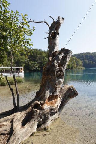 Old tree trunk and a boat on Lake Kozjak, Plitvice Lakes National Park, Plitvice Jezera, Croatia, Europe