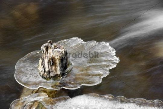 Piece of wood surrounded by ice in a creek